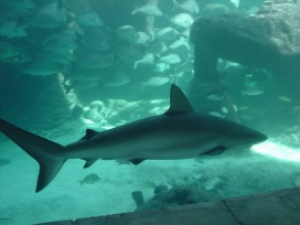 ricky-hanson-rickyhanson-bahamas-atlantis-vacation-travel-trip-hotel-beach-fish-shark-casino-rickyhanson (16)