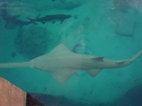 ricky-hanson-rickyhanson-bahamas-atlantis-vacation-travel-trip-hotel-beach-fish-shark-casino-rickyhanson (21)