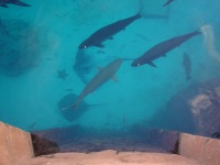 ricky-hanson-rickyhanson-bahamas-atlantis-vacation-travel-trip-hotel-beach-fish-shark-casino-rickyhanson (22)